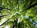 Efficienza energetica, in 5 anni riduzione emissione pari all'assorbimento di 1240 nuove piante