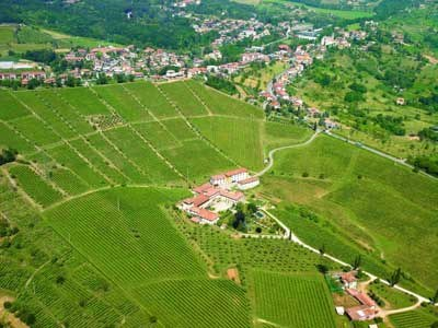 le vigne del Moscato di Scanzo